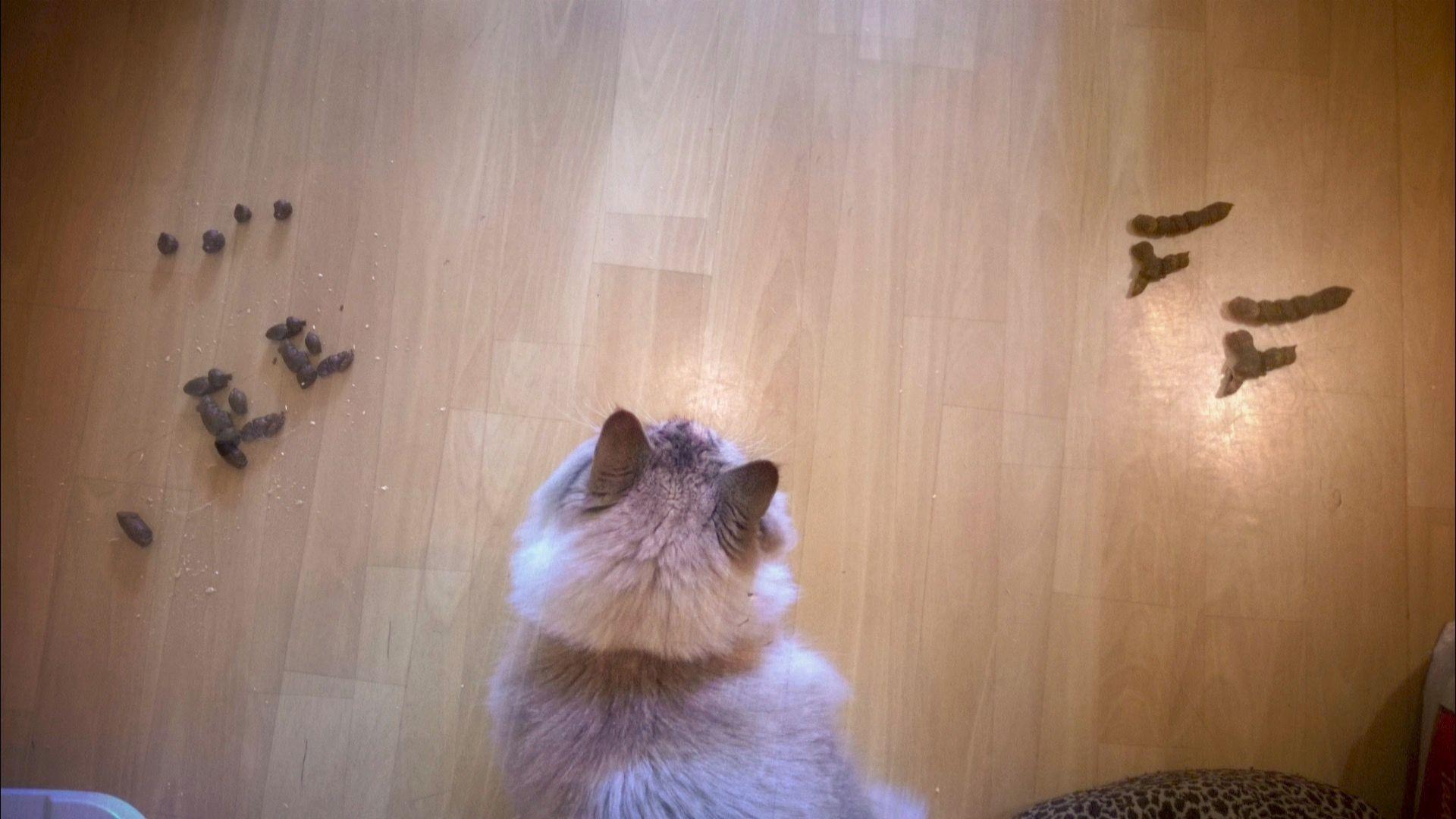 Velký zadek kočička vids