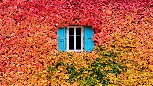 GALERIE: Podoby barevného podzimu, které vás inspirují