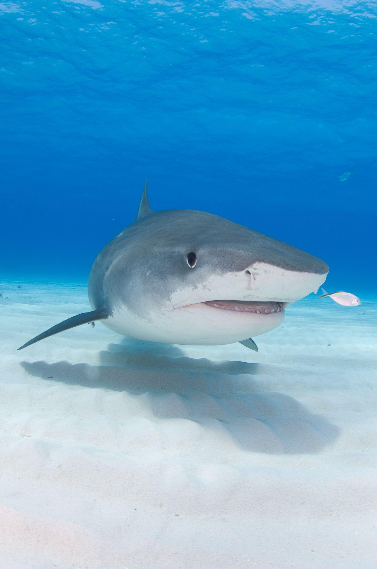 Žralok v Egyptě zabil německého turistu - Aktuálně.cz
