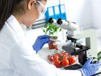 Zdravé stravování není pro každého, tvrdí vědci v přelomové studii a přišli s nápadem