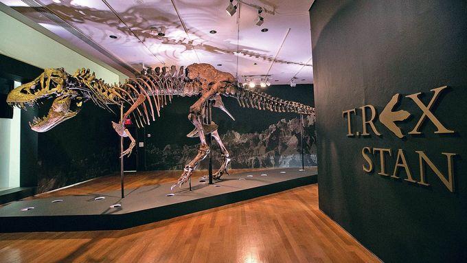 Dinosaurus v obýváku. Fosilie se staly módou bohatých, v aukcích za ně utrácí miliony