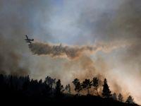 S požáry v Portugalsku a v Itálii bojují už tisíce hasičů, pro italské zemědělství je to katastrofa