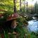 Známe nejkrásnější houbařské fotky roku. Podívejte se, který snímek od vás zvítězil