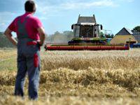 Sucho způsobilo škody za 11 až 12 miliard, potravin mohou podražit, říká ministr
