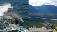Delfíni, plejtváci a činná sopka v jednom. Chaitén vás uchvátí