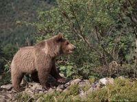 Český turista se v Tatrách zranil při útěku před medvědem