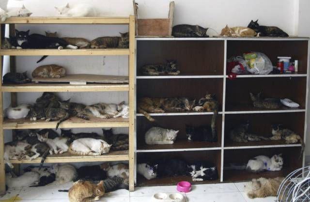 Oholit kočičí galerie