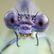 I ochranáři často odmítají přírodě pomáhat, jakkoli absurdně to zní, říká entomolog