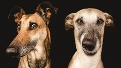 All Good Dogs (Elka Vogelsang)