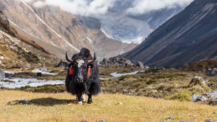 Jak vypadá nepálská dovolená pod stanem? Probouzí vás jaci, chybí vám kyslík a myslíte na jídlo