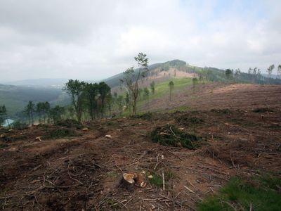 Ekologická katastrofa v Jeseníkách. Kůrovcová kalamita, jaká tu od dob Marie Terezie nebyla