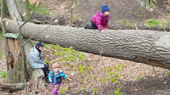 Obrazem: Místo ve třídě v divočině. Lesní školky jsou stále venku a učí děti riziku