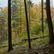 Každé dvacáté české dítě v životě neslyšelo kukačku, dvě procenta nikdy nebyla v lese