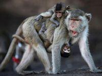 Při otevření pavilonu utekly v olomoucké zoo čtyři opice