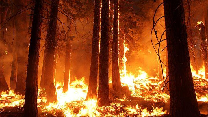 Na Děčínsku ve skalnatém terénu hořel les, na pomoc přijeli i hasiči z Německa