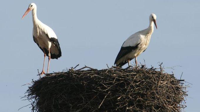 9 ptáků gf pov porno