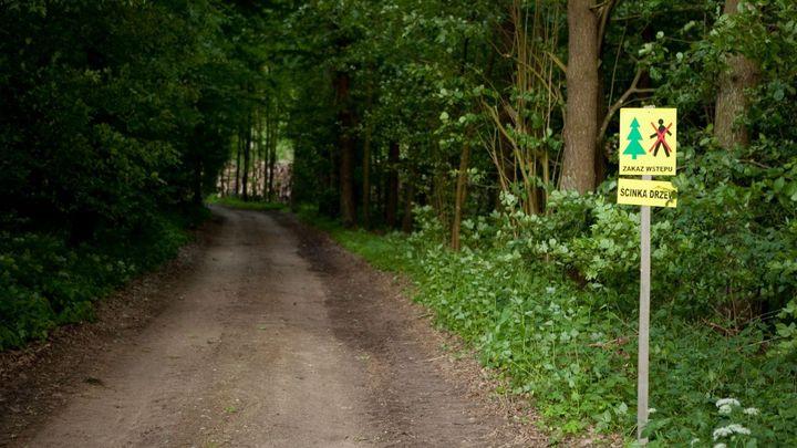 Kácení v Bělověžském pralese skončí. Polský ministr po kritice a rozsudku EU nařídil jeho zastavení
