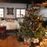 Třetina lidí nekupuje vánoční stromek. Jen tři procenta Čechů nejí cukroví, tvrdí průzkum