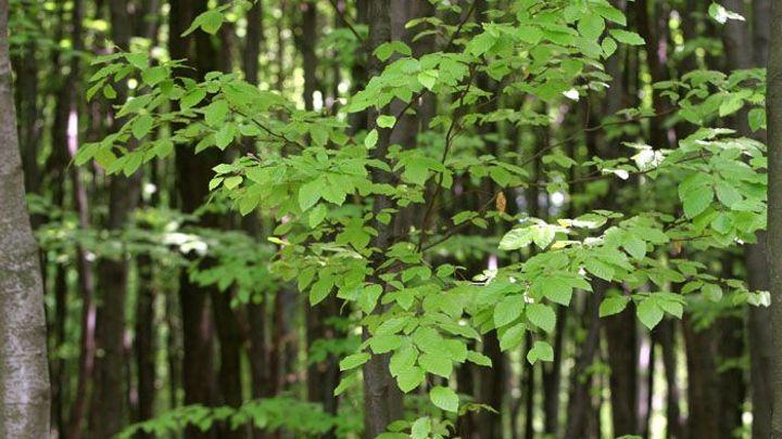 Lesy ČR mají nové vedení, z původních šéfů nezůstal nikdo