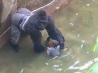 Dítě spadlo ke gorile, zastřelili ji. Jednali správně, říká Bobek