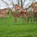 Ze zoo ve Dvoře Králové uteklo po úterní bouřce několik antilop, šest se jich už vrátilo