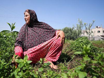 V Pásmu Gazy se míra nezaměstnanosti pohybuje kolem 50 procent, mezi ženami je 62procentní. Některé z nich si našly vlastní pracovní náplň.