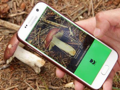 Je lepší hledat houby než pokémony, jestli se někdo otrávil, nevíme, říká autor Aplikace na houby
