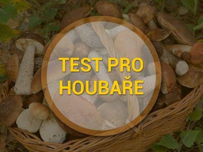 Test: Poznáte jedovaté bedly, žampiony či holubinky? Vyzkoušejte se, než vyrazíte do lesa
