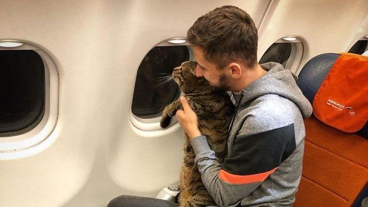 Rus propašoval na palubu letadla tlustého kocoura. Aerolinka ho za to potrestala