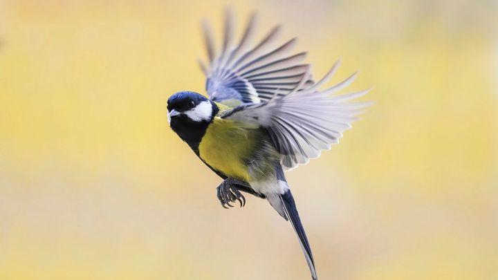 """Ptáci si """"vypnuli"""" nepostradatelný gen. Tým vedený českými zoology přišel na unikátní záhadu"""