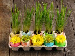 Velikonoční osení