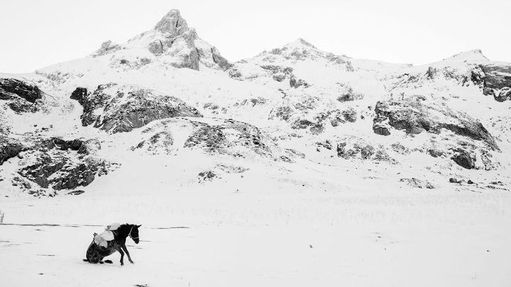 """""""Oscara"""" pro nejlepšího světového fotografa roku 2017 získal Belgičan Frederik Buyckx"""