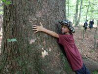 Foto: Co dokáže příroda? Přesvědčte se, jak se bez člověka vypořádala s katastrofami na Šumavě