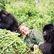 Foto: Hlas, který vypráví o krásách přírody. Attenborough pronikl i mezi domorodce