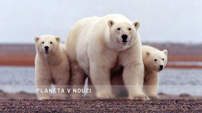 Červencové novinky o klimatu: Do 100 let vyhynou lední medvědi a stovky druhů ryb