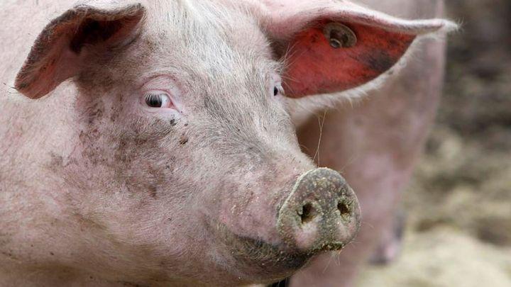 Odkud je maso v obchodě? Ode dneška se dozvíte víc