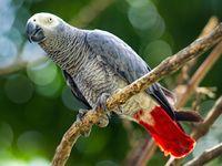 Papoušek se doma nudil, přes internet si objednával pamlsky. Zarazila ho až majitelka