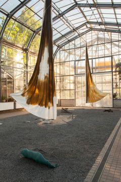 An example of the work of Anna Ročňová.  Fan, subtropical greenhouse of the Prague Albertov Botanical Garden, 2017.