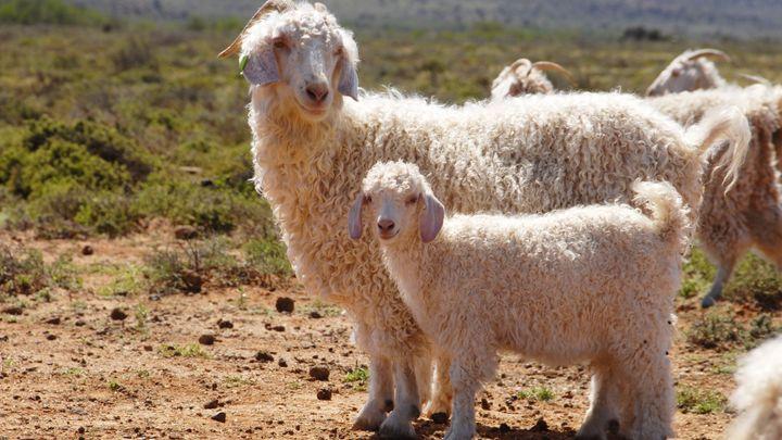 Známý e-shop stáhne výrobky ze zvířat. Kožešiny už neprodává, vyřadí i  hedvábí, kašmír a mohér
