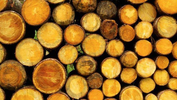 Konec nelegálního obchodu s vzácným dřevem. Čeští vědci mají metodu, jak ho poznat