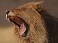 Lovkyně: Zabití lva Cecila? Byla to brutální poprava
