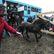 Fotoreportáž: Divocí koně vybíhají do stepi u Milovic