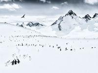 Nejlepší krajinářské fotky světa: arktická krása, ale i kamenolom a vypálené vesnice