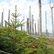 Přesun těžby i nižší DPH na palivové dřevo. Ministerstvo posiluje boj proti kůrovci