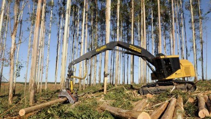 Dřevo zlevňuje, lesníci mohli těžit i v zimě
