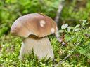 Velký houbařský test: Zkuste si ho dřív, než bude pozdě