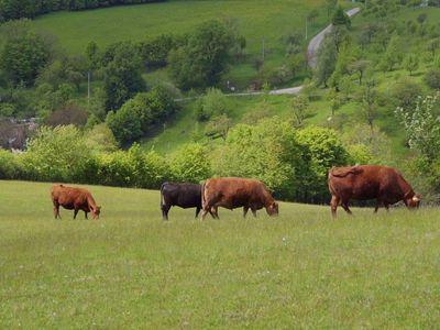 Na Farmě Rudimov jsou zvířata chována vsouladu sjejich přirozenými potřebami. To dává biomasu lepší chuť a křehkost. Farma se zaměřuje na šlechtění.