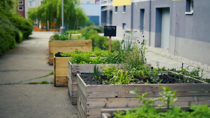 Foto: Zahradničit v Praze je v kurzu. Jahody rostou uvnitř vnitrobloků, dýně u Vltavy