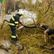 Silné bouřky zasáhly Česko, hasiči na Litoměřicku odklízejí popadané stromy a čistí ucpané kanály