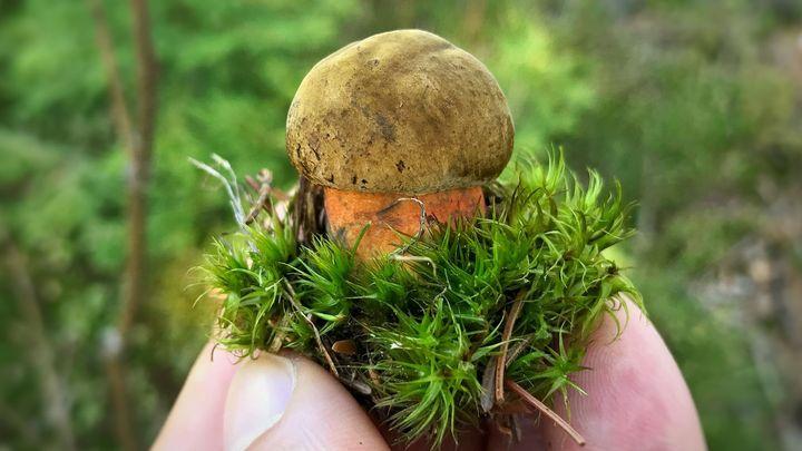 Fotky: Pořád rostou. Houbařská soutěž vrcholí, tohle jsou vaše nejlepší úlovky z lesa